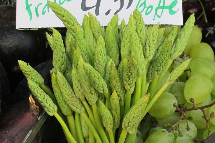 IMG_2496--Loncomelos-Asperge_sauvage-Rue_Lepic_Paris-Part.jpg